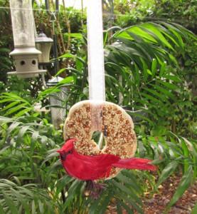 bird-bagel