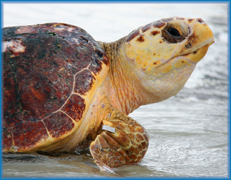 Turtle-Day-(1)_Featured