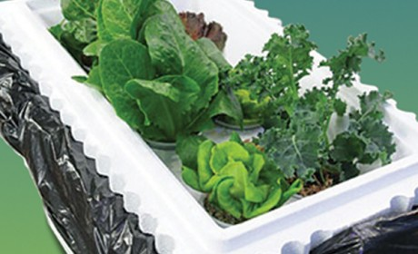 Hydroponic_Featured