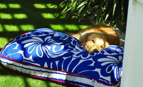 Keep Pets Healthy, Cool During Hot Weather (2)
