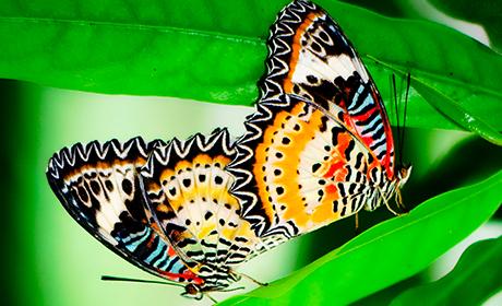 Butterfly_Feat